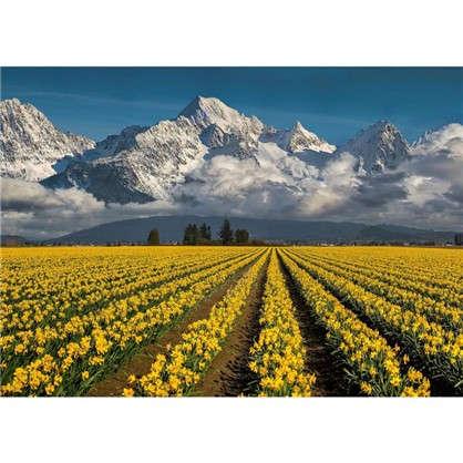 Фотообои бумажные Небо и нарциссы 254х184 см