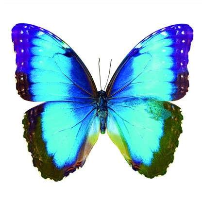 Фотообои флизелиновые Бабочка 200х200 cм