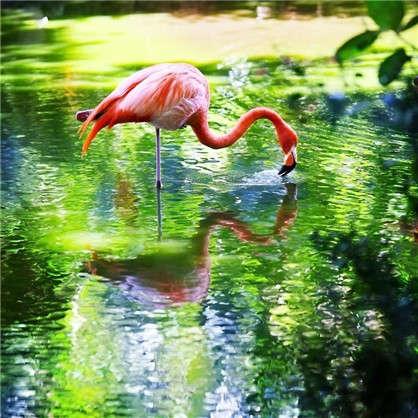 Фотообои флизелиновые Фламинго 200х200 см
