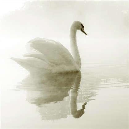 Фотообои флизелиновые Лебедь 200х200 cм цена