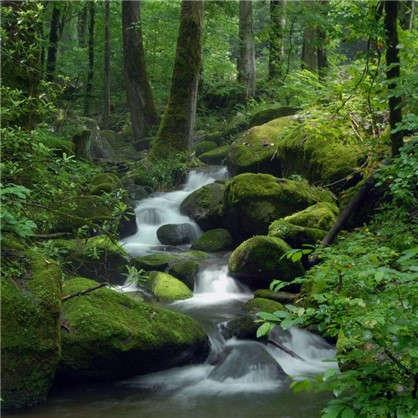 Фотообои флизелиновые Лес 200х200 см