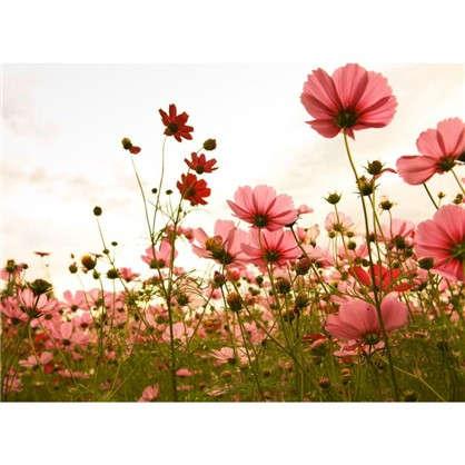 Фотообои флизелиновые Полевые цветы 370х270 см