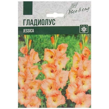 Гладиолус крупноцветковый Джессика цена