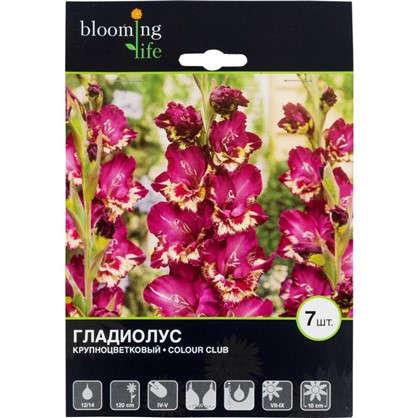 Гладиолус крупноцветковый Колор Клаб