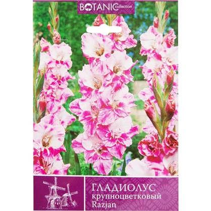 Гладиолус крупноцветковый Рязань
