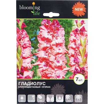 Гладиолус крупноцветковый Сызрань цена