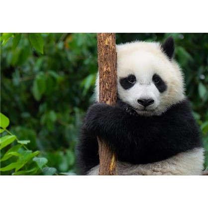 Картина на холсте 30х40 см Панда цена