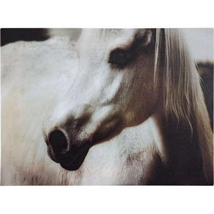 Картина на холсте Лошадь черно-белая 30х40 см