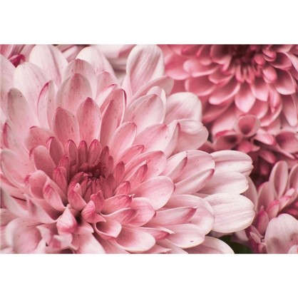 Картина на стекле 50x70 см Хризантема цена