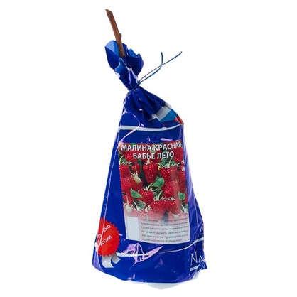 Малина красная Бабье Лето (пакет) цена