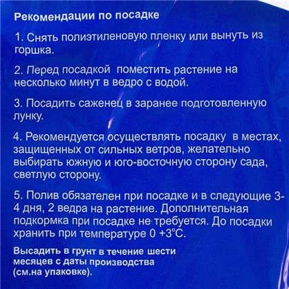 Малина Малиновый микс 2 шт. цена