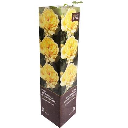 Роза флорибунда Йеллоу Саммер в тубе цена