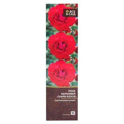 Роза парковая Генри Келси в тубе