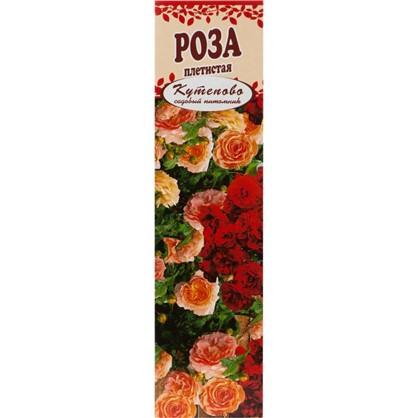 Роза плетистая Казино в коробке