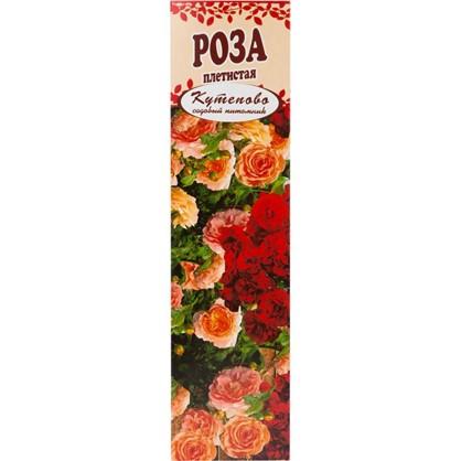 Роза плетистая Полка в коробке цена