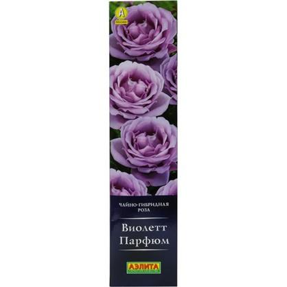 Саженец розы Виолетт Парфюм цена