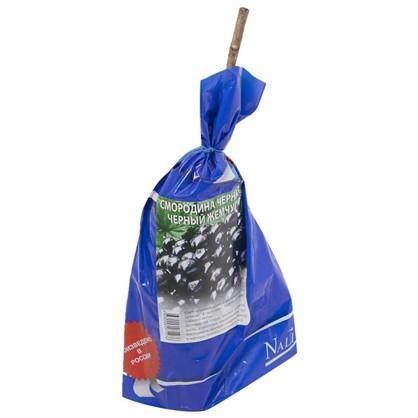 Смородина черная Черный Жемчуг (пакет) цена