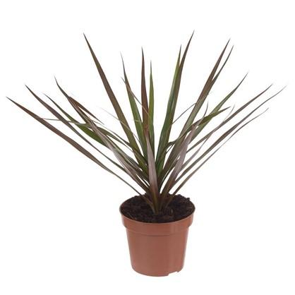 Удобрение Plants Mix цена